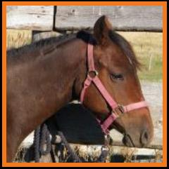 PM Joe's Dark Legacy-Bay grade QH filly