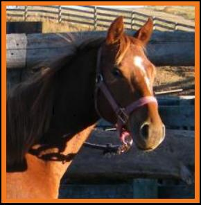 PM Joe's Blazin League-sorrel 2012 filly
