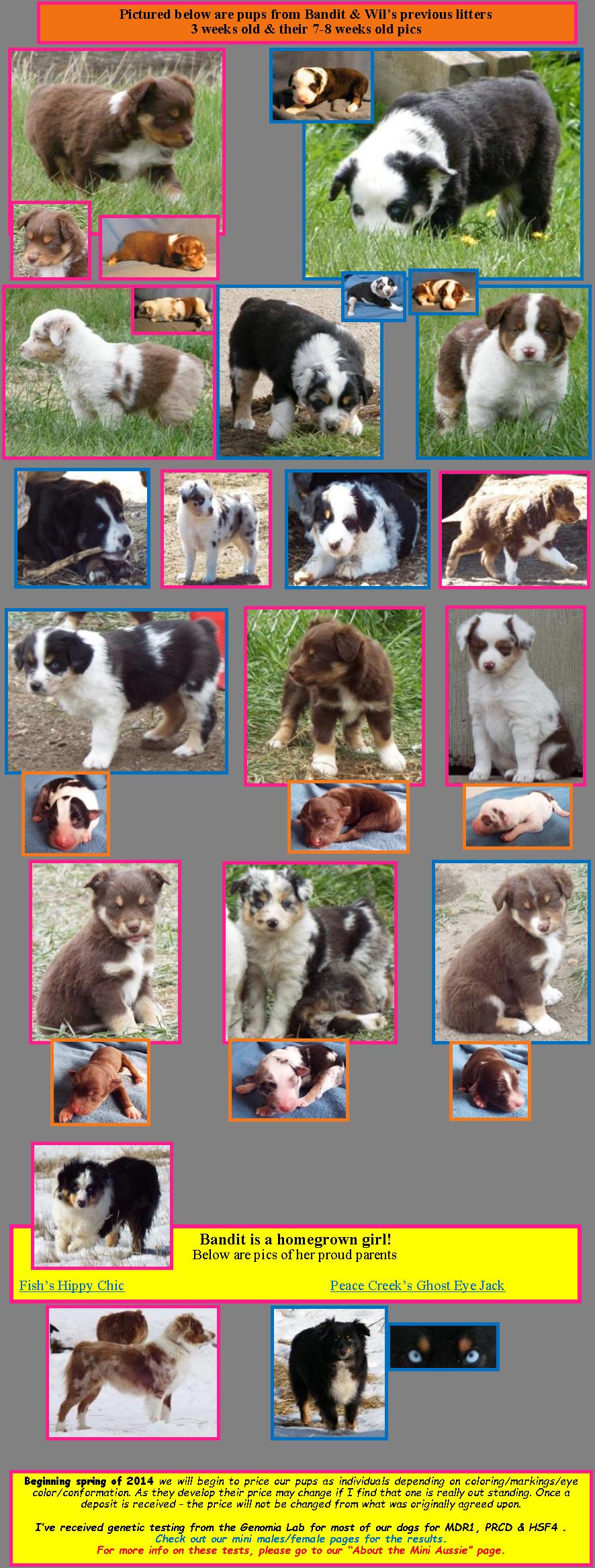 puppy information